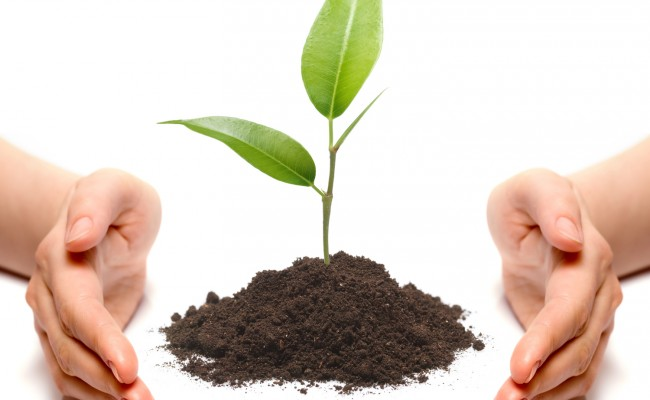 Hands and plant isolated